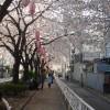 呑川緑道(桜新町~都立大学~緑ヶ丘)散策