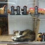 シルバーウィークは「すし猫」に遭遇