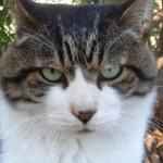 ひさしぶりにコロコロしたノラ猫をモフモフした