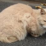 世田谷の猫