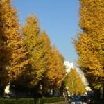 渋谷の神社仏閣公園名所と猫を紹介した過去記事のまとめ