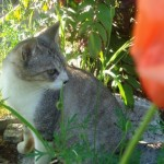 世田谷区用賀の猫