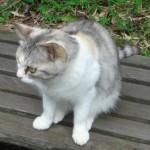 芝公園の猫