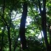 東京で神秘的な雰囲気を味わえるオススメ5スポット