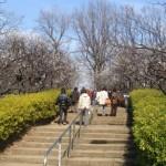 羽根木公園「せたがや梅まつり」
