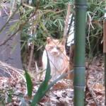 亀戸天祖神社の猫