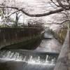 仙川遊歩道東宝スタジオ付近の桜と紅葉