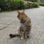猫は生の対極としてではなく、その一部として存在している