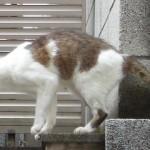 今まさに猫が飛び移らんと・・・しなかった