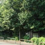 神明の森みつ池特別保護区