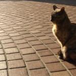 12月の猫は太陽を追う