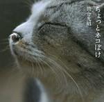 「ちょっとネコぼけ」岩合光昭 写真・文