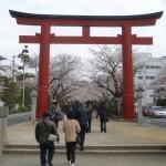 鎌倉の桜の名所「鶴岡八幡宮若宮大路段葛の桜並木」