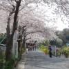 三浦半島随一の桜の名所「衣笠山公園」と「衣笠城址」