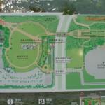 紅葉の見頃を迎えた立川の「国営昭和記念公園」の写真